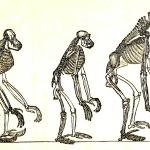 Can Evolution explain morality? Universe Senses Naturalism